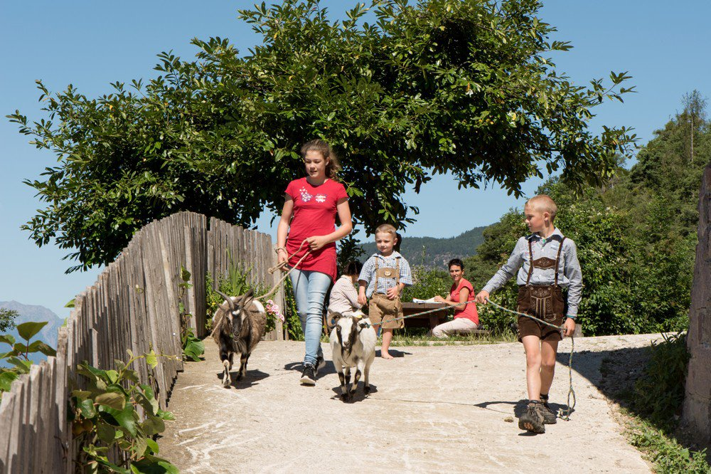 Farm holidays for children - exciting experiences in the mountains
